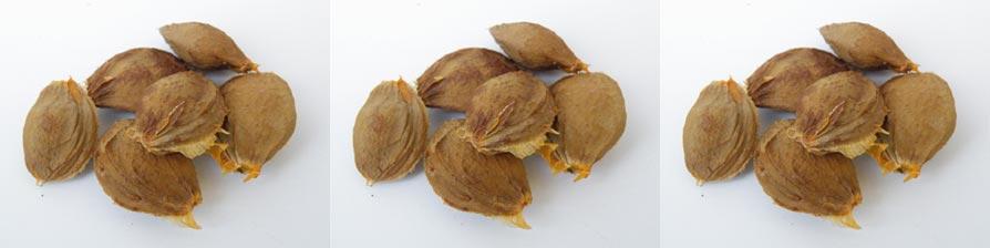 abrikozenpitten gevaarlijk